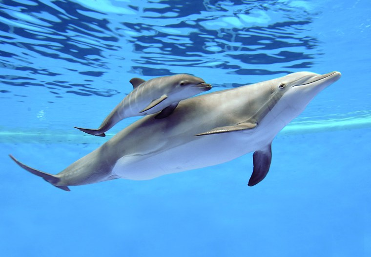 Image: Bottlenose dolphins