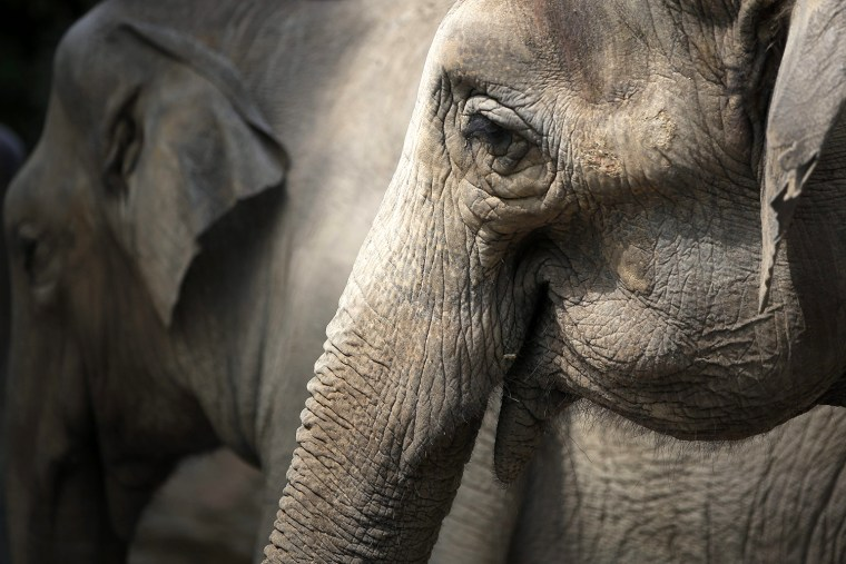 Image: Animals at Ueno Zoo