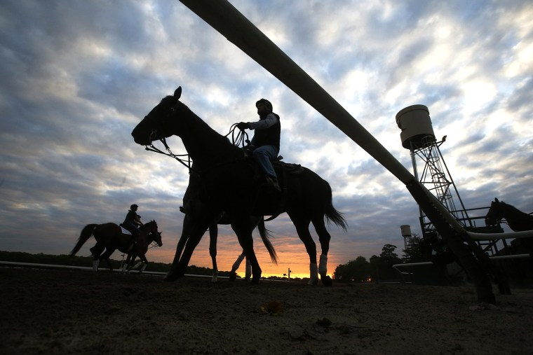 Image: Horses are seen in silhouette making their way to the track for morning workouts at Belmont Park in Elmont, New York