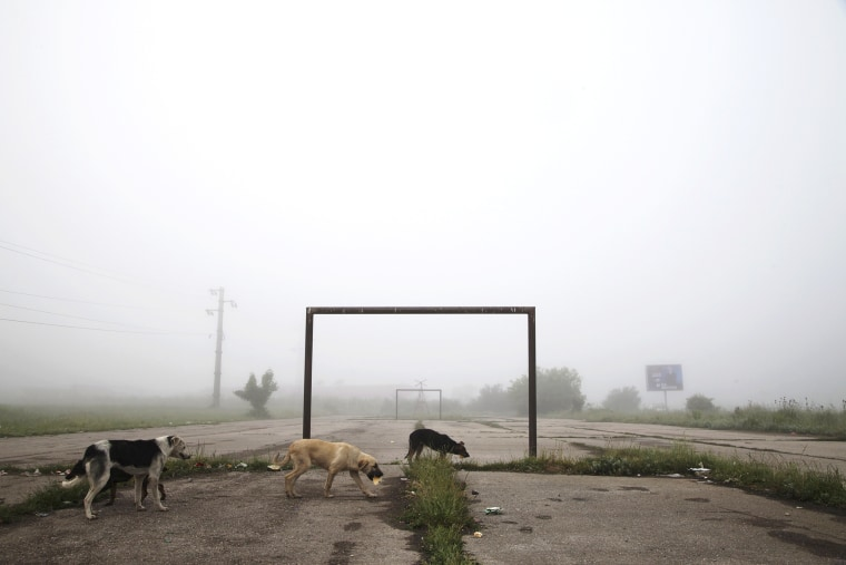 Image: Dogs walk past a goalpost on a foggy morning in the town of Lipljan