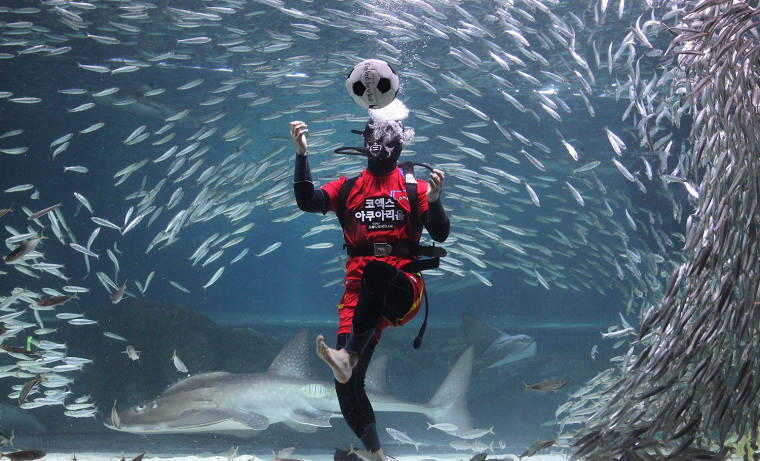 South Korean Divers Root For Their Team For 2014 FIFA World Cup