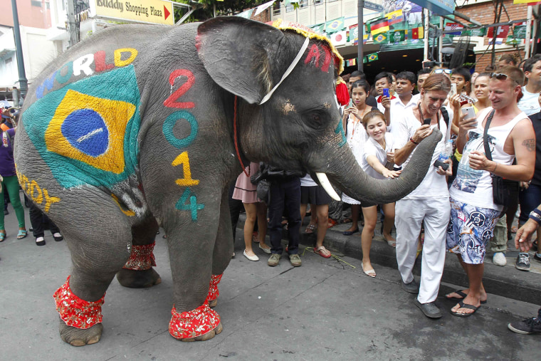 Image: People look at an elephant painted with the Brazil flag during a performance to celebrate the 2014 World Cup in Brazil, along the Khaosan tourist street in Bangkok