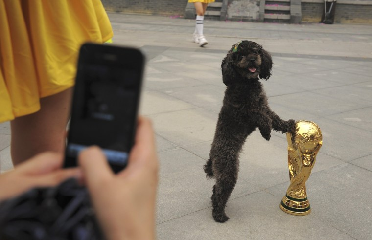 Image: A dog with a Brazilian flag sticker on its head, touches a replica of the World Cup trophy as a visitor takes pictures during an event to celebrate the upcoming 2014 World Cup in Brazil, in Wuhan