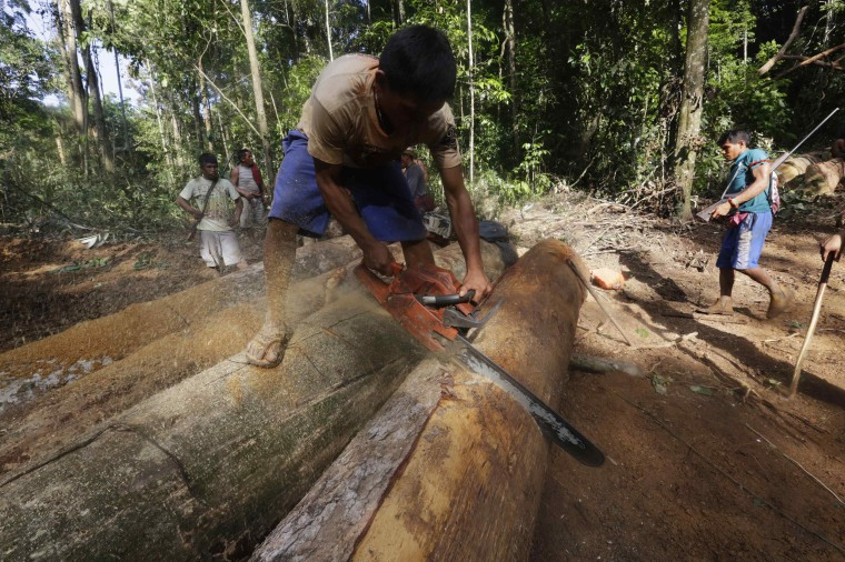 Image: A Ka'apor Indian warrior uses a chainsaw to ruin one of the logs they found in the Alto Turiacu Indian territory