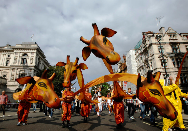 """Image: Demonstrators in animal costumes walk in the """"People's Climate March"""" in central London"""