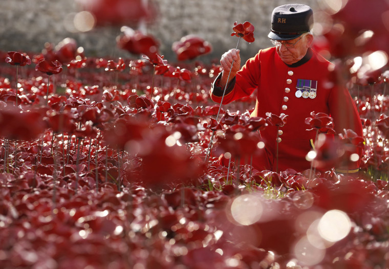 "Image: Chelsea Pensioner Albert Willis plants a ceramic poppy amongst other poppies that form part of the art installation called ""Blood Swept Lands and Seas of Red"" at the Tower of London"