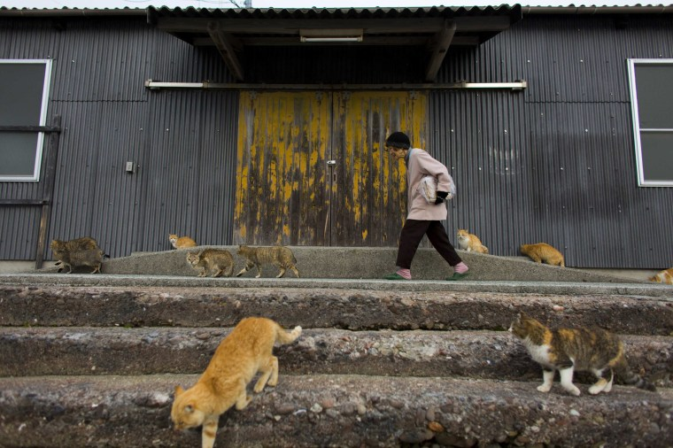 Image: A woman is surrounded by cats as she walks along the embankment on Aoshima Island in the Ehime prefecture in southern Japan
