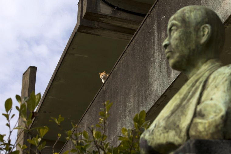 Image: A cat sits on a wall of a derelict school on Aoshima Island in the Ehime prefecture in southern Japan