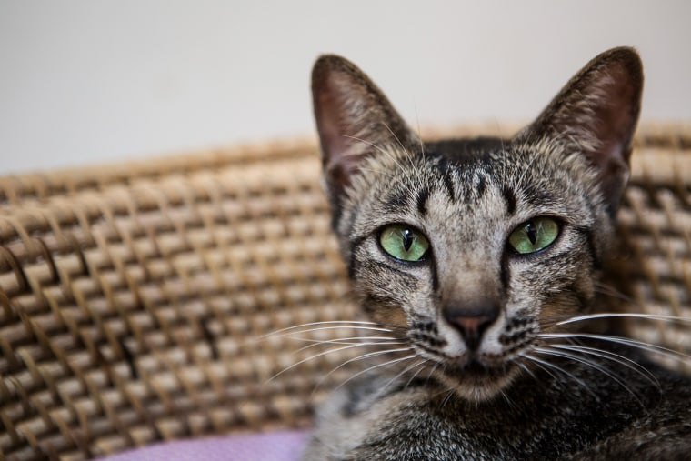 Image: Balinese Cat Shelter Appeals For Adopters