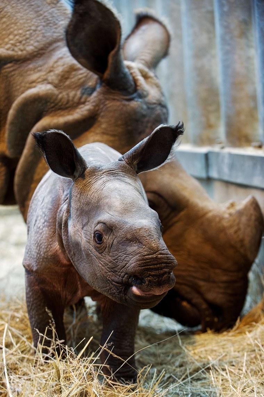Image: FRANCE-ANIMAL-ZOO-BIRTH