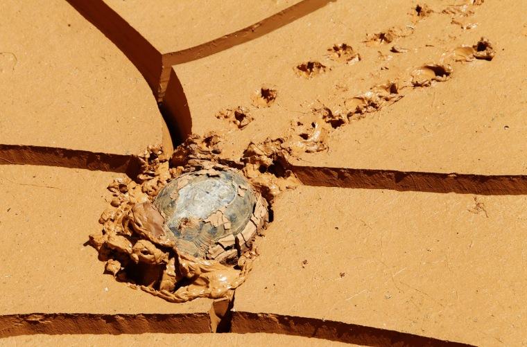Image: A tortoise makes its way through mud in Kfar Kila village near the Lebanese-Israeli border, in south Lebanon