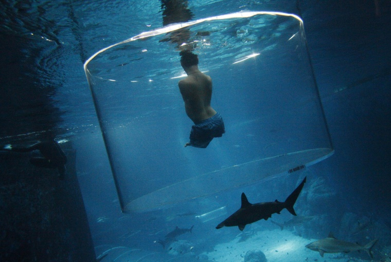 Image: Vujicic, an Australian motivational speaker who was born without limbs, swims with sharks at the Marine Life Park in Singapore