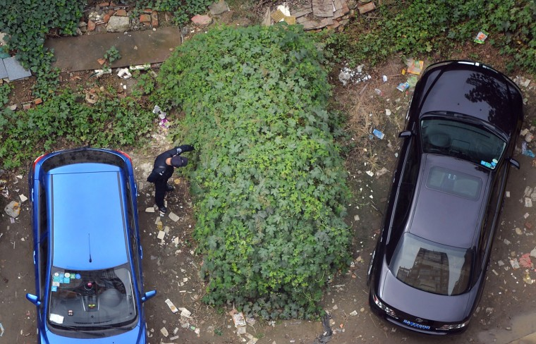 Image: A parked car in Huayang village, in China's Sichuan province, was left for so long that thorny vines and ivy grew up all around it.