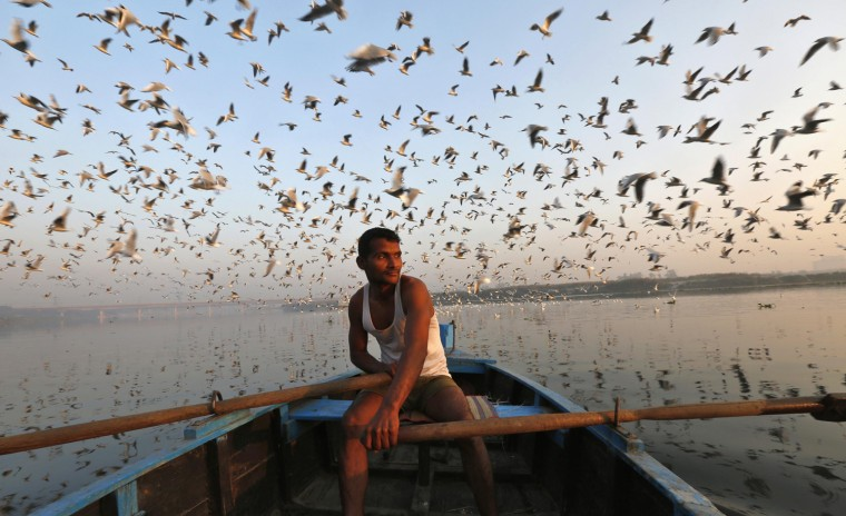 Image: Migratory birds fly above a man rowing a boat in the waters of river Yamuna during early morning in old Delhi