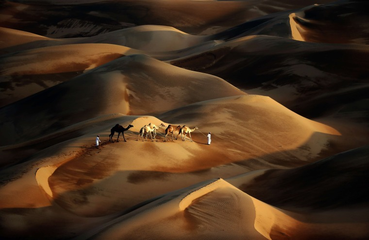 Image: TOPSHOTS-UAE-CAMEL-DESERT-NATURE-TOURISM