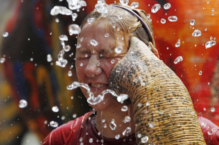 Image: A tourist reacts as an elephant sprays her with water in celebration of the Songkran water festival in Thailand's Ayutthaya province