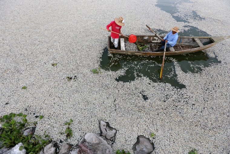 Image: Thousands of dead fish