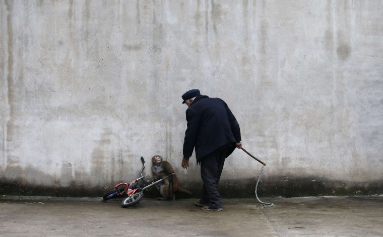 Image: A monkey dodges as its trainer Qi Defang approaches during a circus training in Suzhou