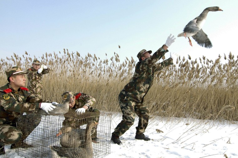 Image: A paramilitary policeman releases a wild goose in Linghai
