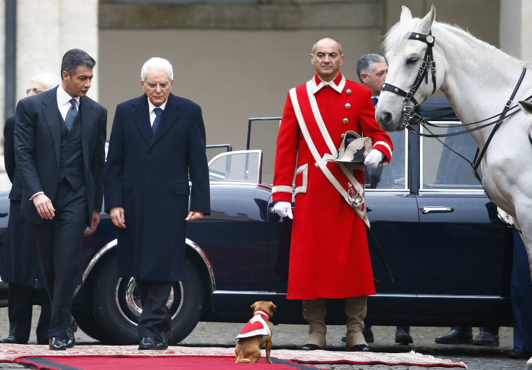 "Image: Italy's newly elected president Mattarella arrives to inspect a guard of honor during a welcoming ceremony as a dog the guard "" mascotte"" stands on the red carpet at the Quirinale presidential palace in Rome"