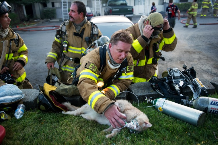 Image: Sac Metro firefighter Matt Randazzo tries to resusitate a cat o