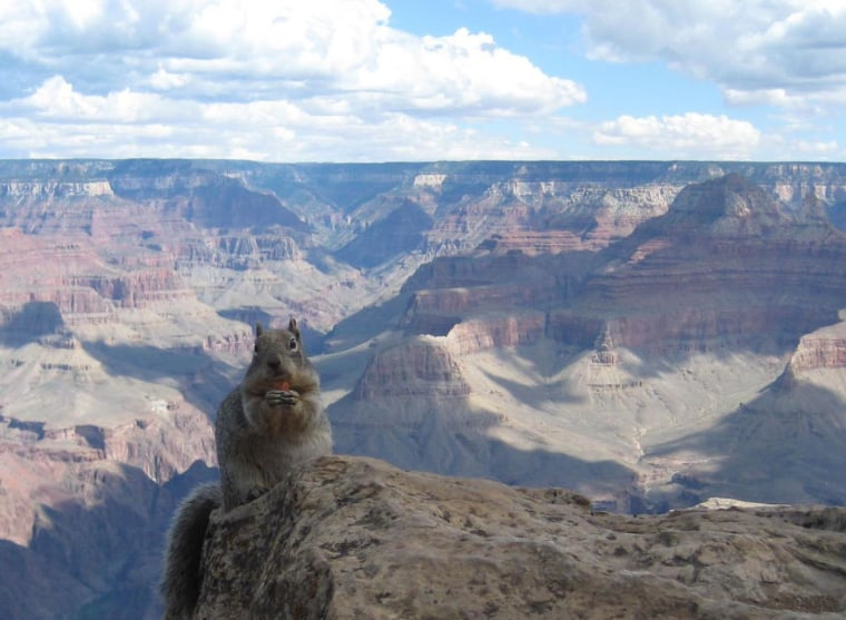 My boyfriend and I were walking along the South Rim of the Grand Canyon, when we caught a squirrel munching on a snack. September 2008.