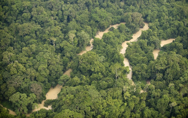 Plants and trees in forests like this one in northern Brazil absorb carbon from the atmosphere. But they also need nitrogenand that's harder to come by. As a result, they won't be able to absorb as much carbon over time, a new study found.