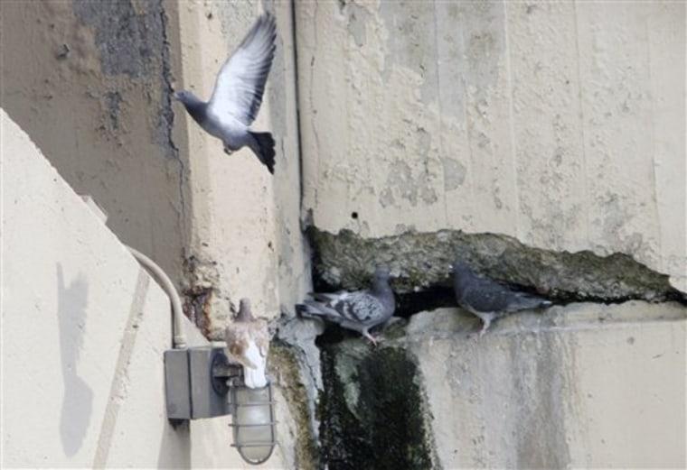 Bridge Collapse Pigeons