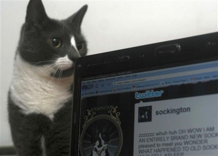 Web Twittering Cat