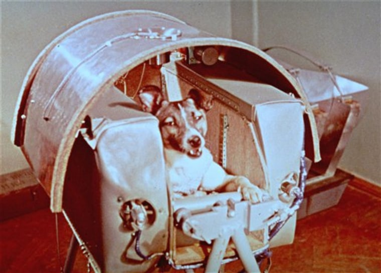 Russia Space Dog