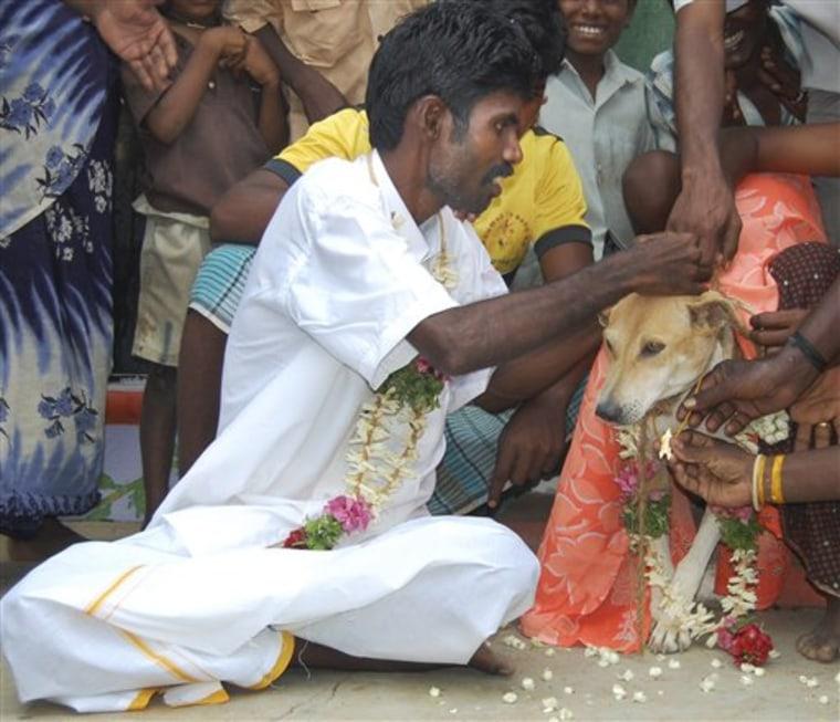 India Man Weds Dog