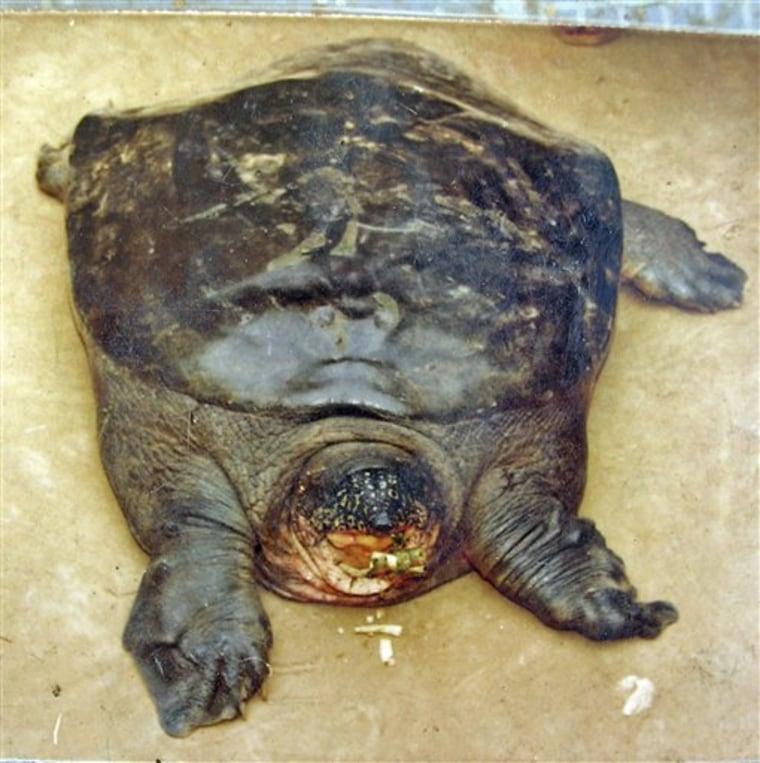 Zoo Rare Turtle