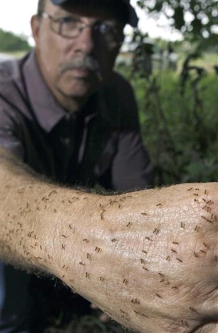 Texas Ants