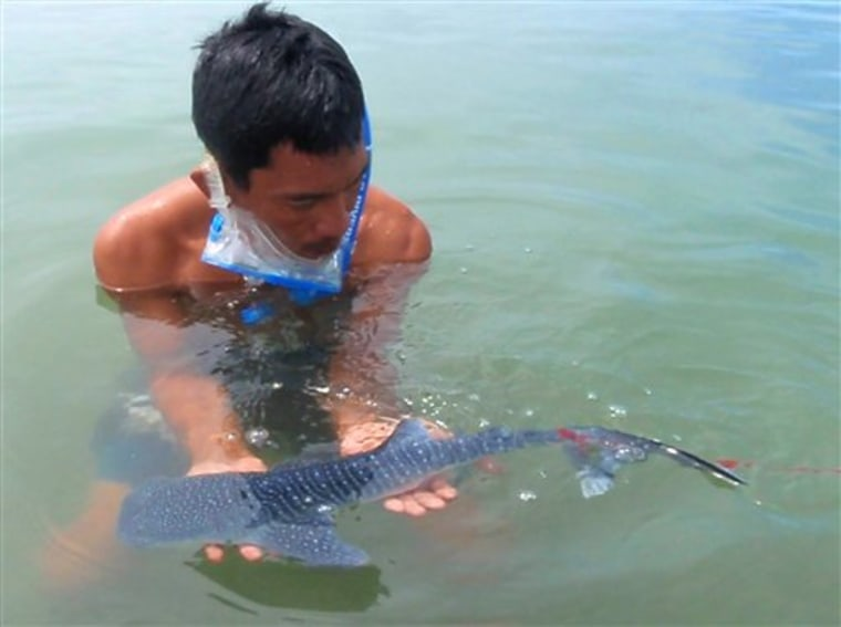 Philippines Smallest Whale Shark