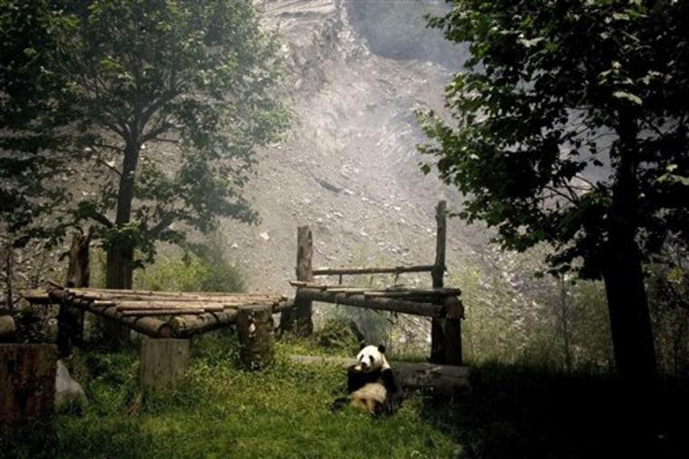 AS China Pandas