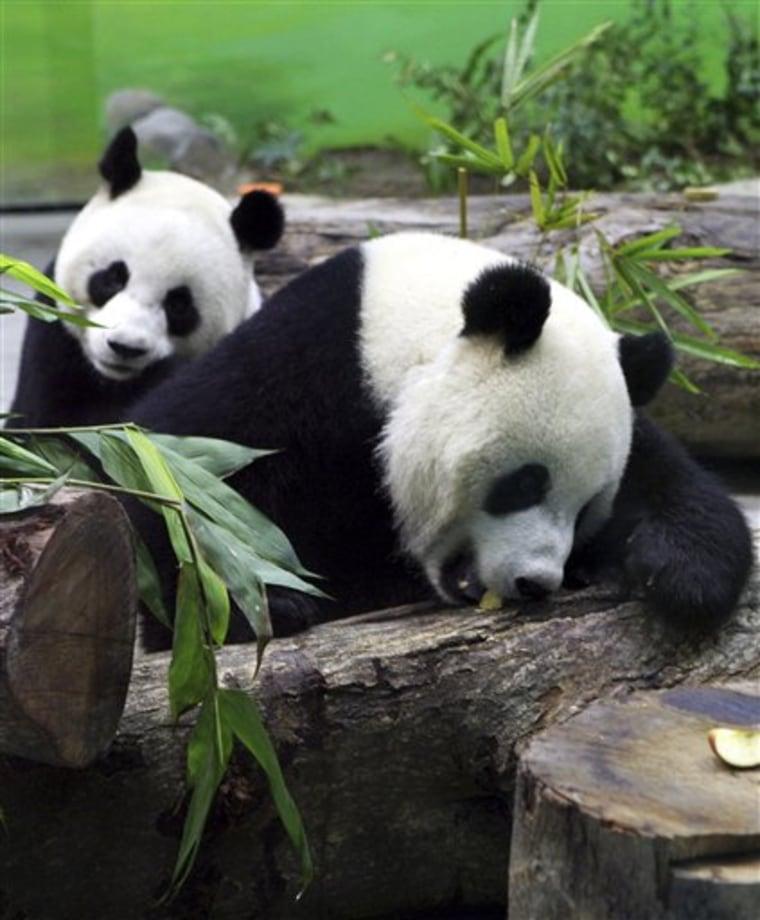 Taiwan China Pandas