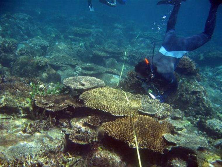 Indonesia Tsunami Coral Reefs