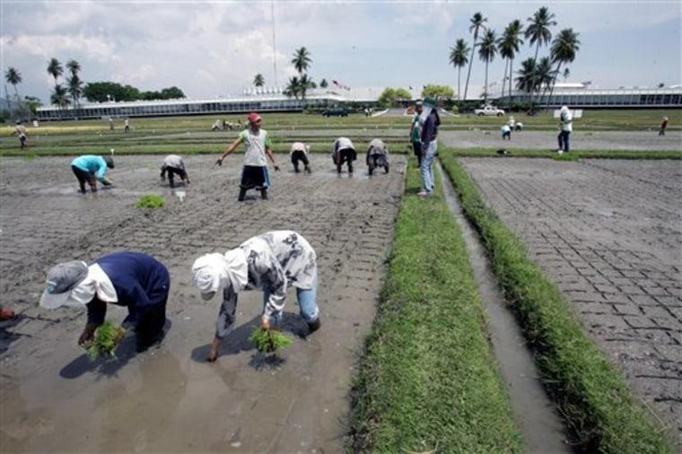 Food Crisis Soil