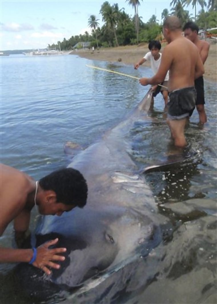 Phlippines Rare Shark