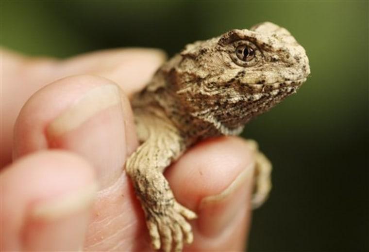 New Zealand Rare Reptile