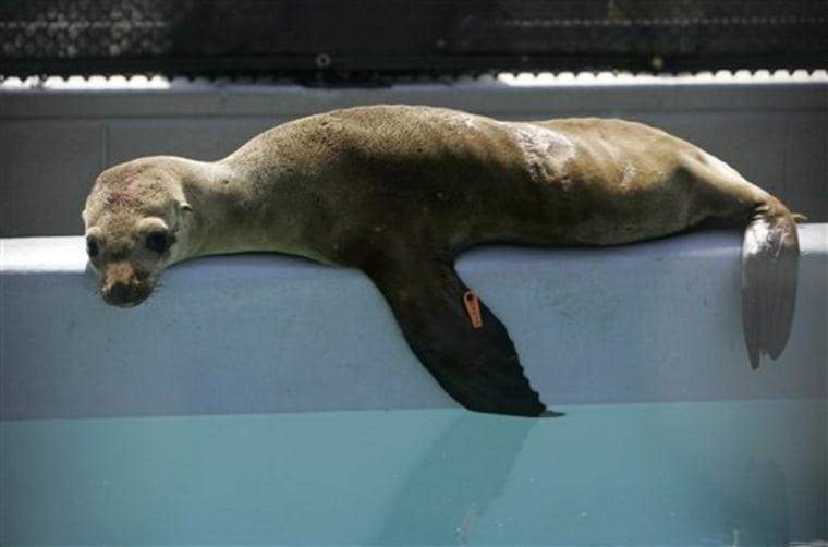 Marine Mammal Er