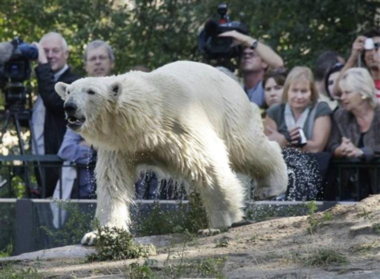 Germany Polar Bear Giovanna