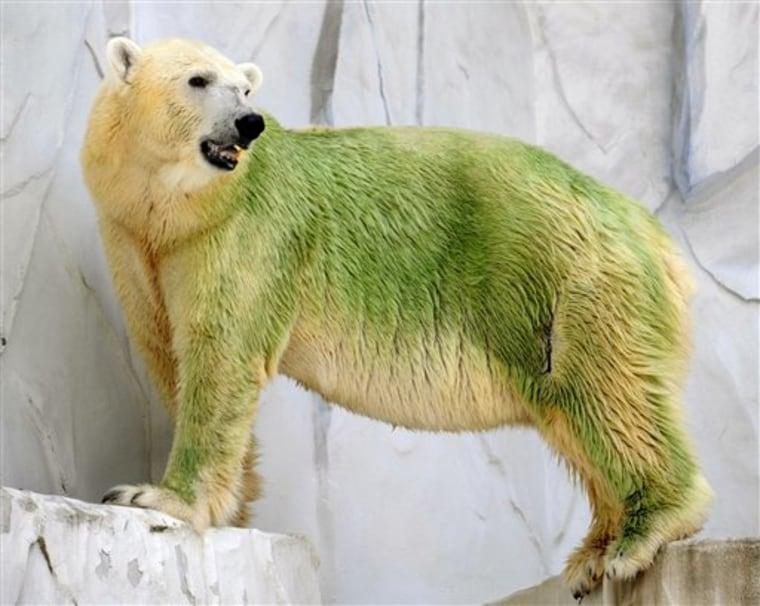Japan Green Bear
