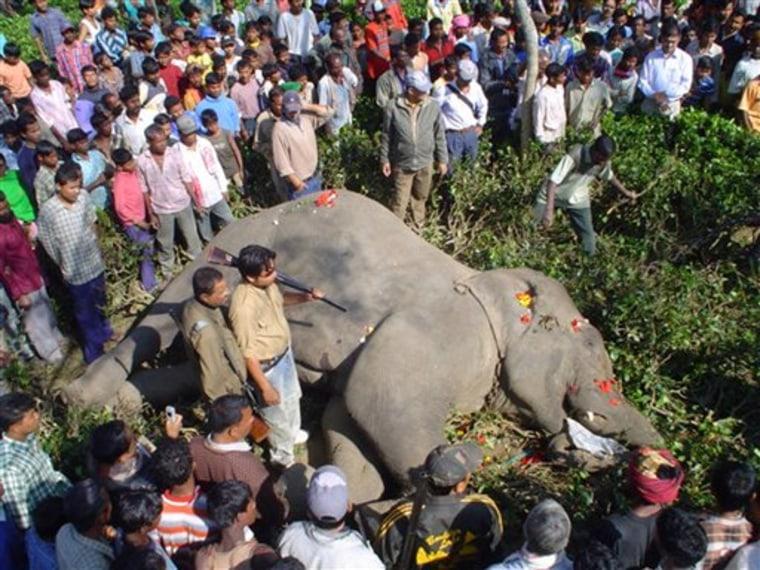 INDIA KILLER ELEPHANT