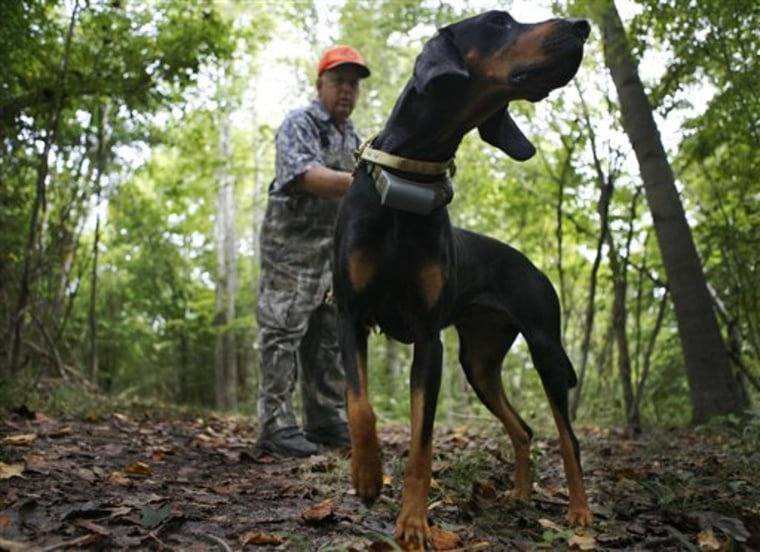 Hunting With Hounds