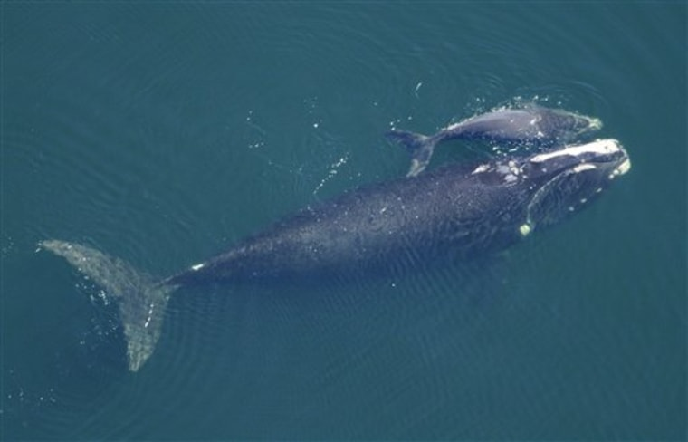Whale Babies