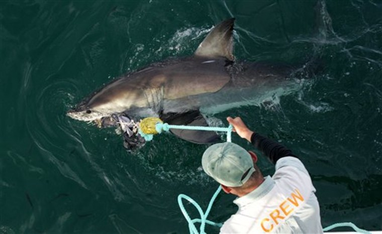 South Africa Shark Spotting