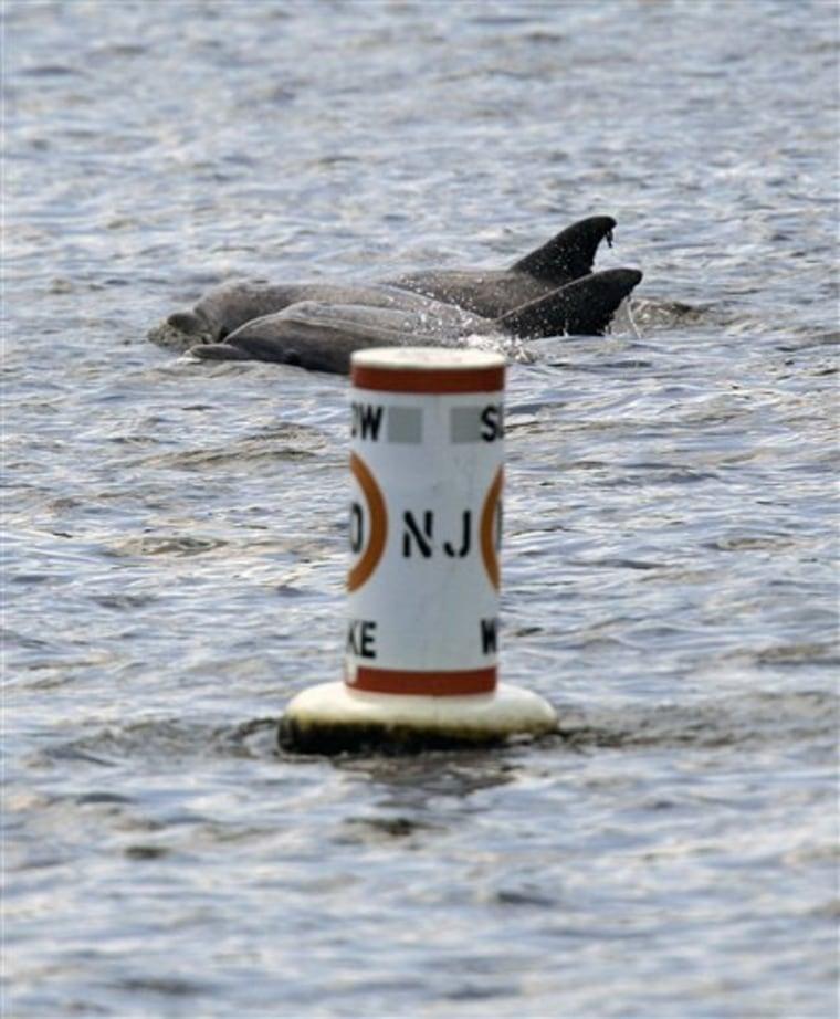Wayward Dolphins