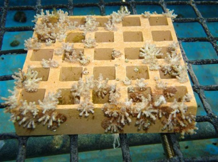 Japan Reef Politics