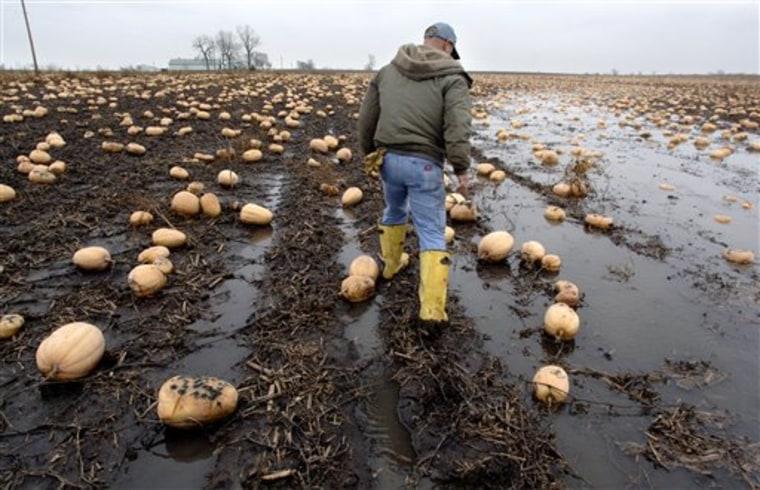 Pumpkin Pie Shortage